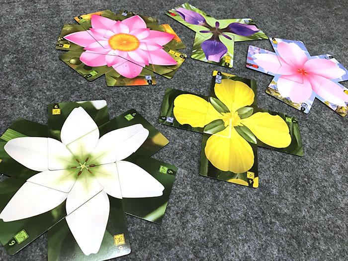 Lotus all flowers