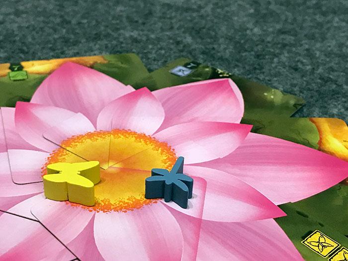 Lotus scoring a flower